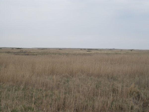 Day Distant Field Grass Hohes Gras Horizon Over Land Horizont  Landscape Nature Non-urban Scene Nordfriesland Outdoors St. Peter-Ording St. Peter-Ording Strand Westerhever Wiese  Wiesen