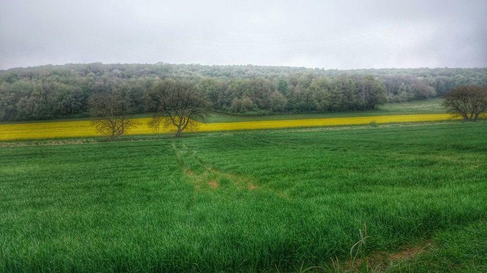 Spring Into Spring Spring Spring Has Sprung Spring Flowers Springtime Fields Champs Campagne Ferme Colsa