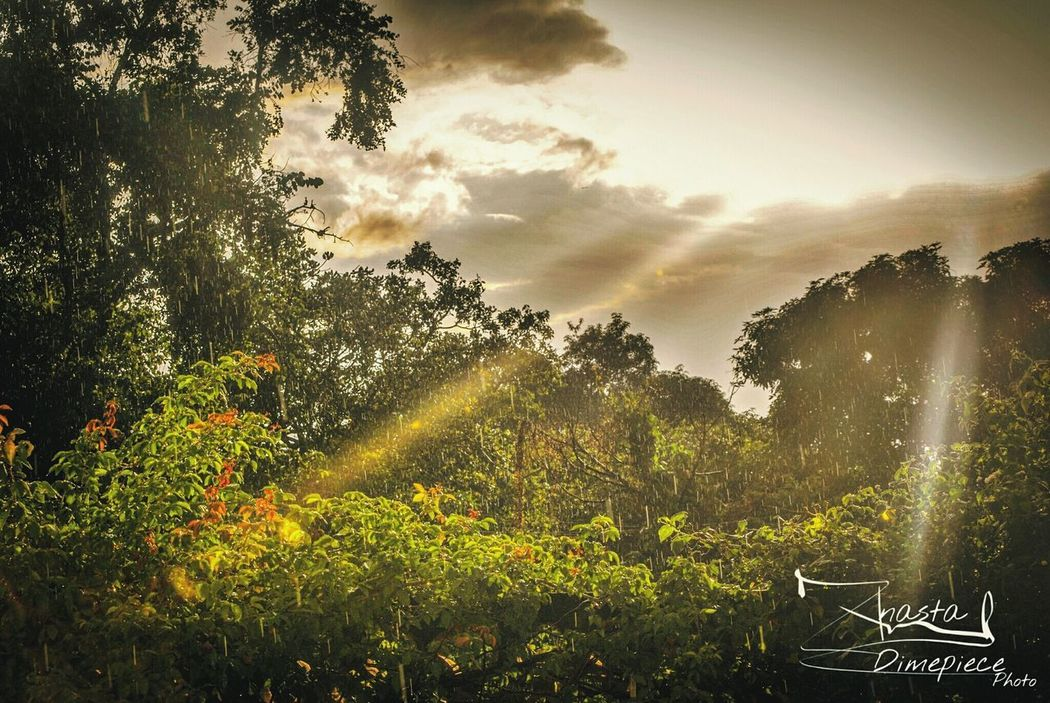 Nature Sunlight Sky Water Tree Beauty In Nature Anastakitungwa Theprince18 Kitungwa Dimepiecephoto First Eyeem Photo Day Paint The Town Yellow