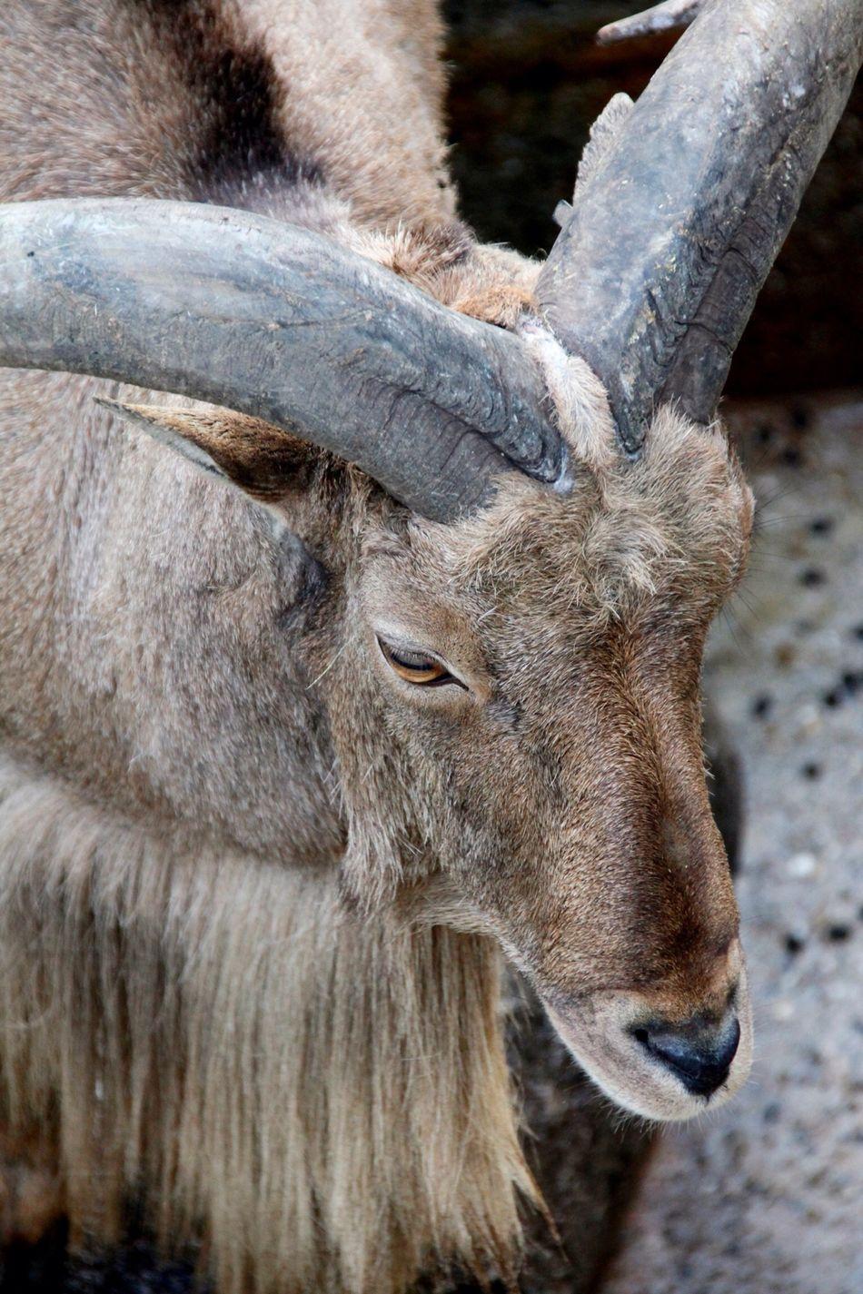 Beautiful stock photos of deer, Adult Animal, Animal, Animal Body Part, Animal Head