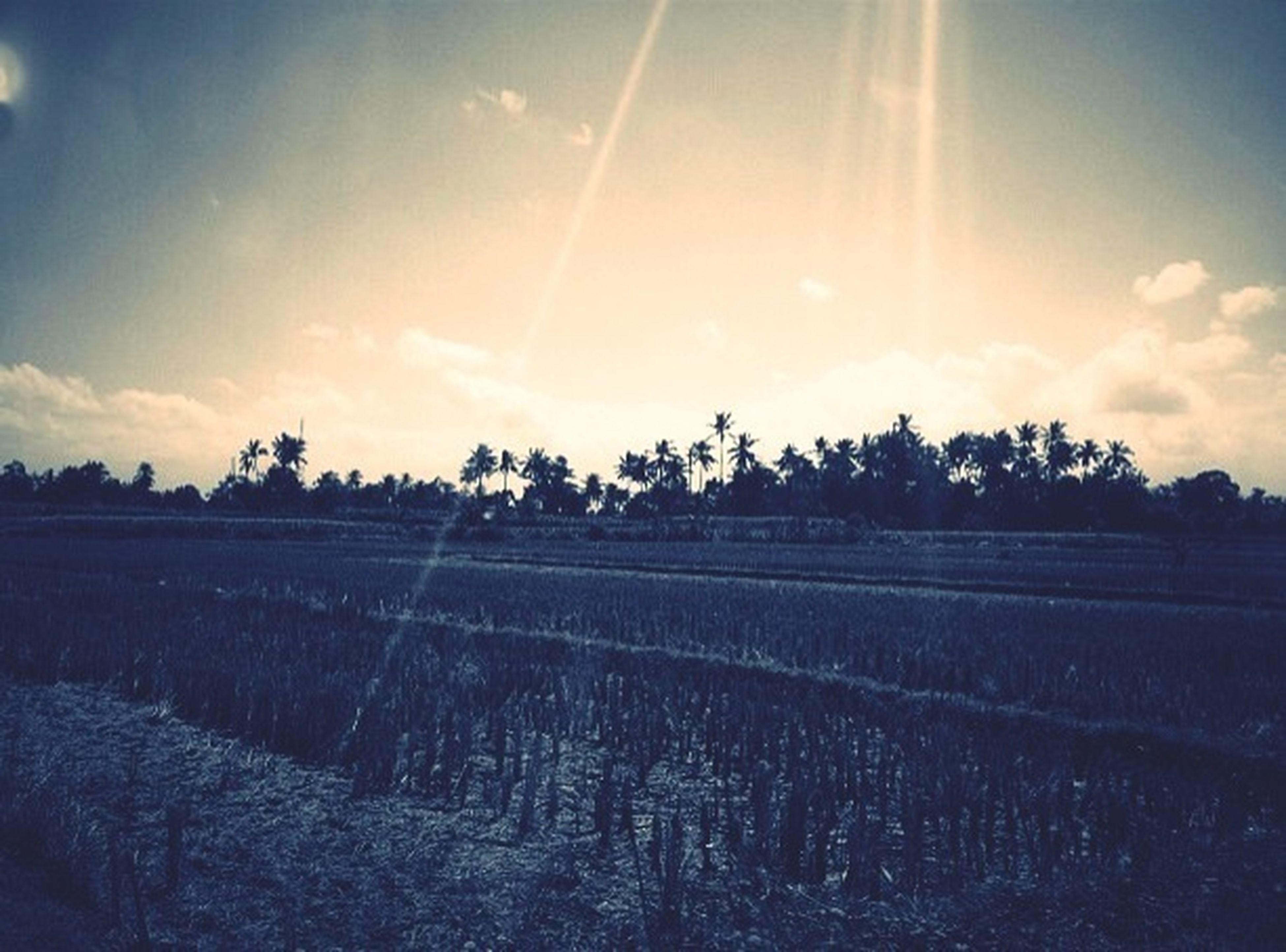 sky, field, landscape, tranquility, sunlight, sun, tranquil scene, sunbeam, cloud - sky, tree, nature, rural scene, road, grass, beauty in nature, scenics, lens flare, cloud, growth, no people