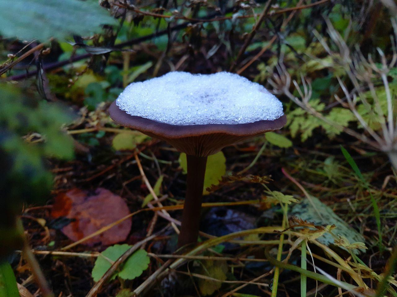 Shroom Forest Shroom Mushroom Nature Snow ❄ Outdoors Fungus Growth