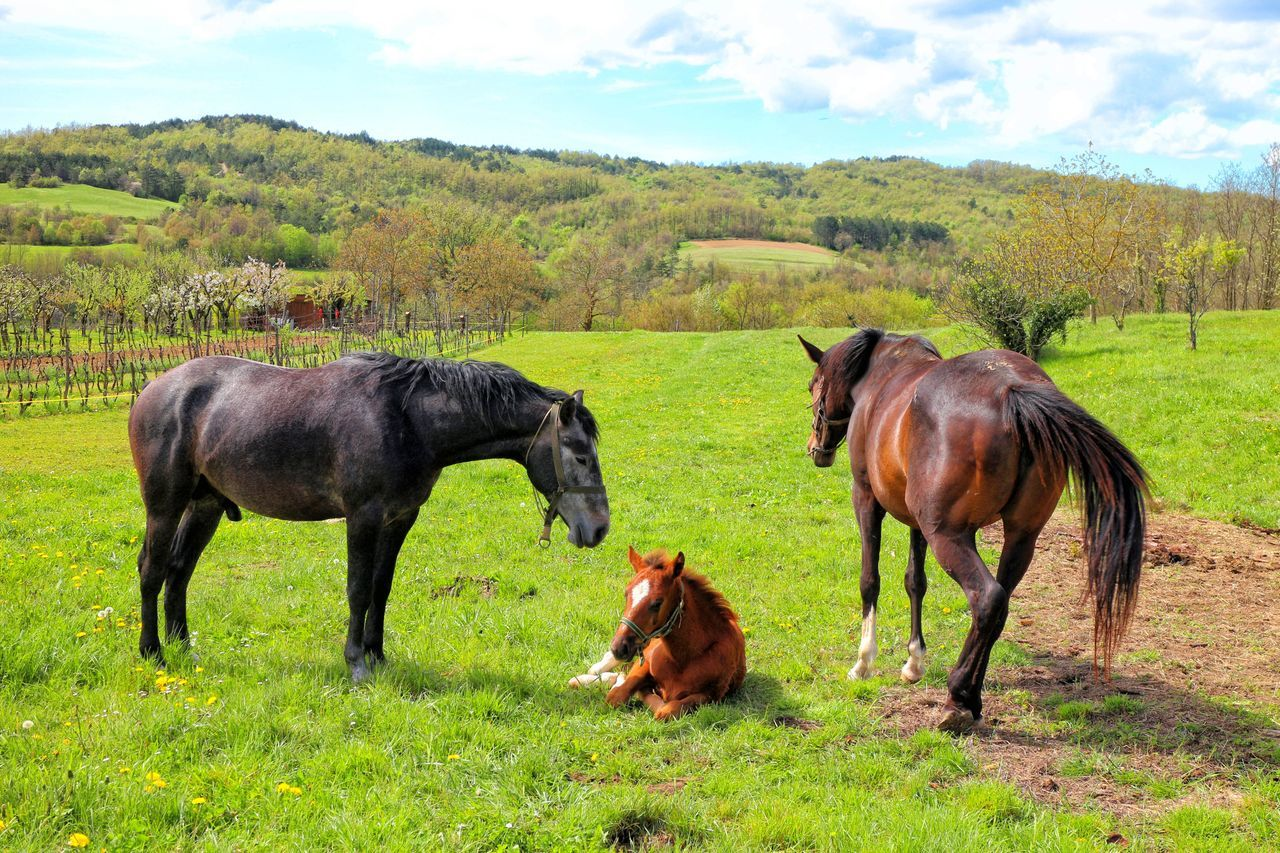 Horse family <3 Animals Baby Horse Croatia Croatia ♡ Field Grass Guadian Horse Horses Hum City Hum, The Smallest City In The World Istria Nature No People Parents Smallest City In The World Sunny Day Horse Life Brown Green Baby Horse❤️ Relaxing Moments