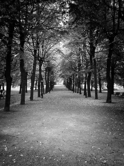 Black trees. Welcome To Black Monochrome Blackandwhite Nature