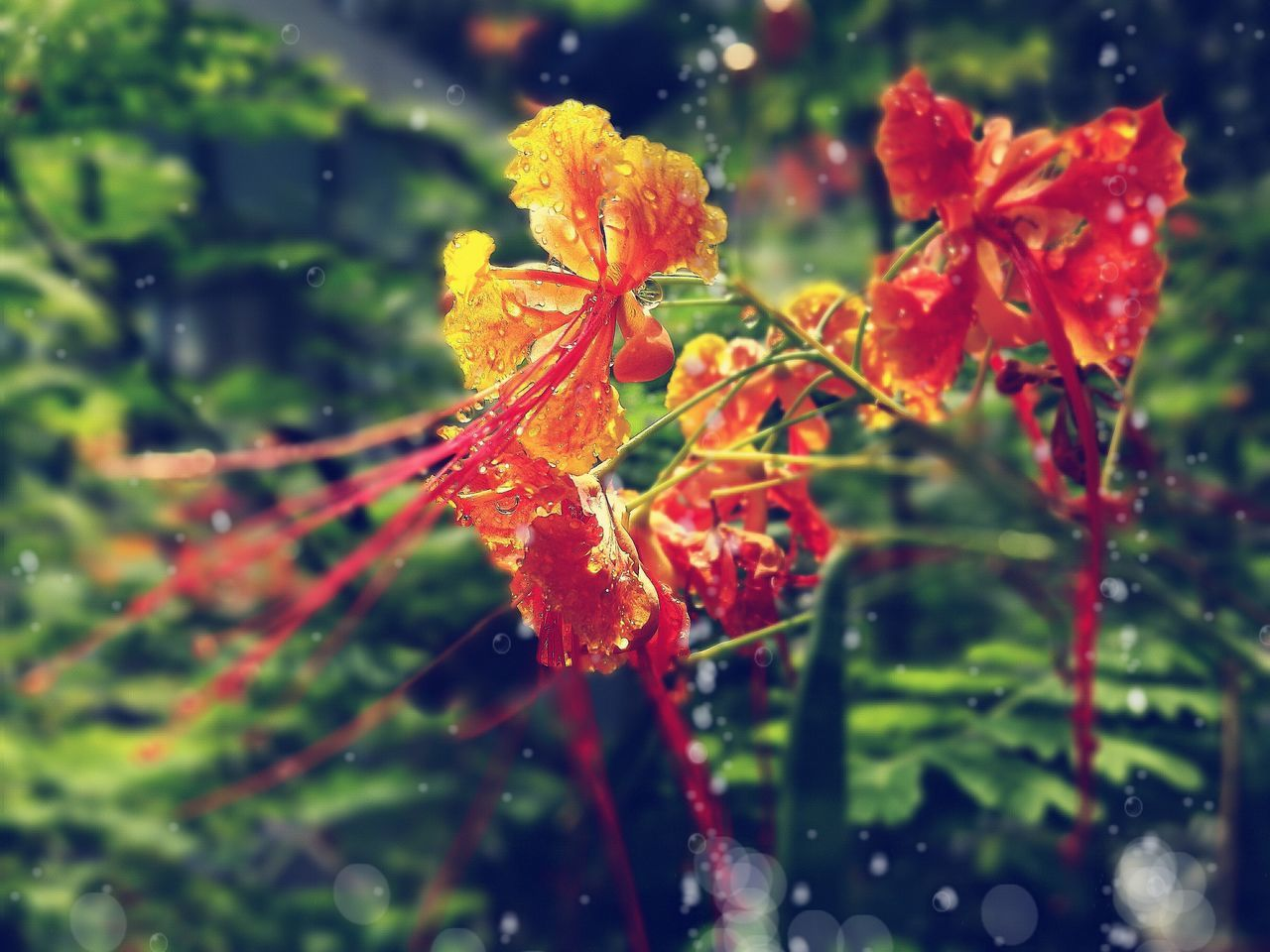 nature, orange color, beauty in nature, no people, growth, outdoors, close-up, day, red, plant, fragility, water, flower