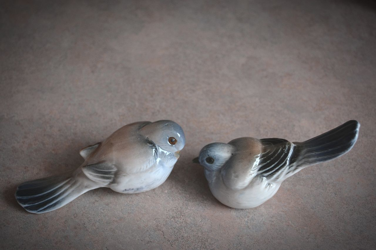 bird, animal themes, no people, animal wildlife, animals in the wild, nature, togetherness, day, close-up, indoors, mammal, mourning dove