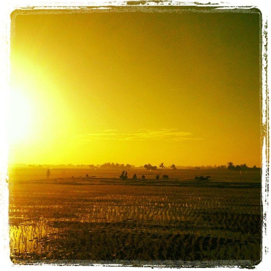 Bukang liwayway. Sunrisetoday Sunrise Sunriselover Naturelover Ricefield Farmers Bulakenyo BulacanBulacan Philippines Photooftheday @tuklas_pilipinas @loves_philippines @photosharingcommunity