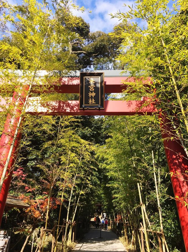 Tree Growth Nature Outdoors Sky Wish Shrine Of Japan Architecture Atami In Japan Checking In Japanese Shrine