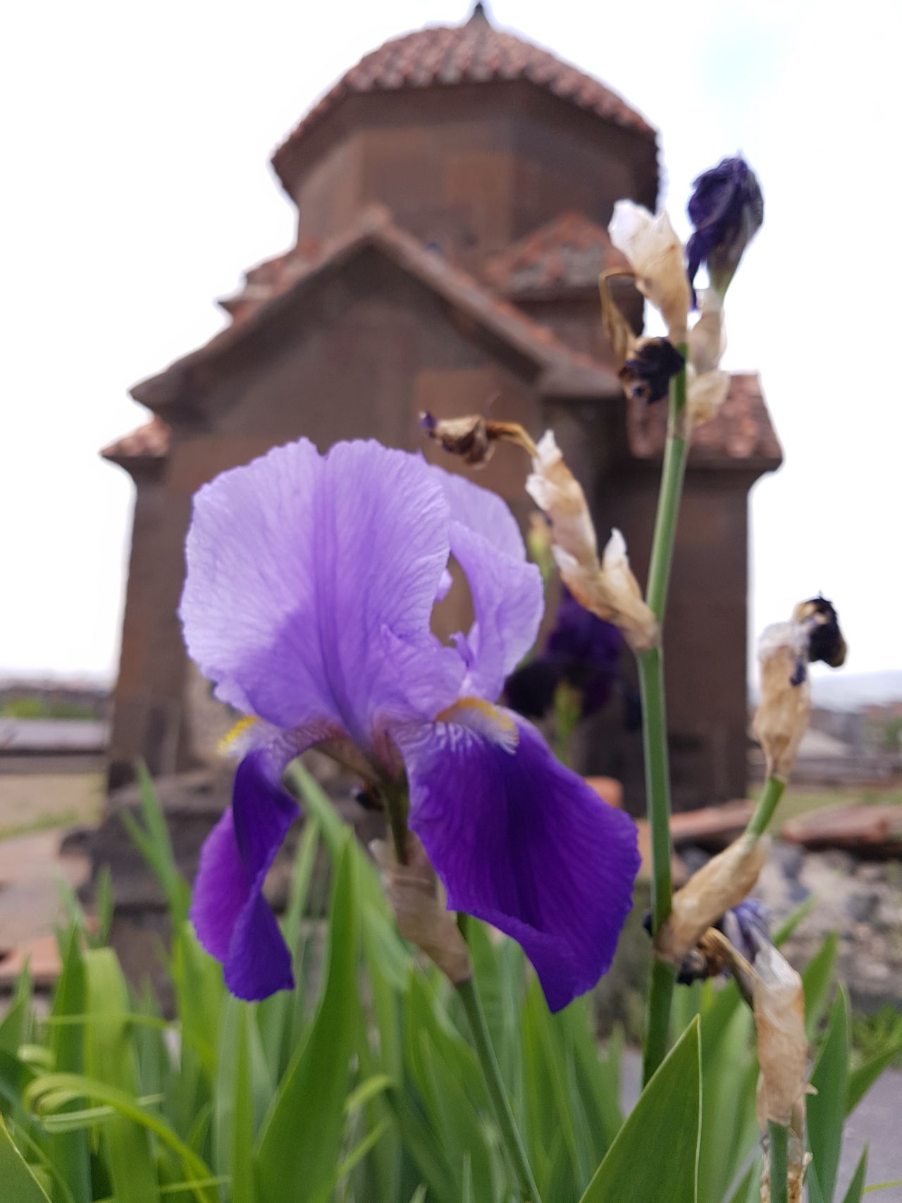 Flower Purple No People Day Architecture Vibrant Color Nature Outdoors Selective Focus Ancient Culture Christianity Armenian Church Architecture Single Flower