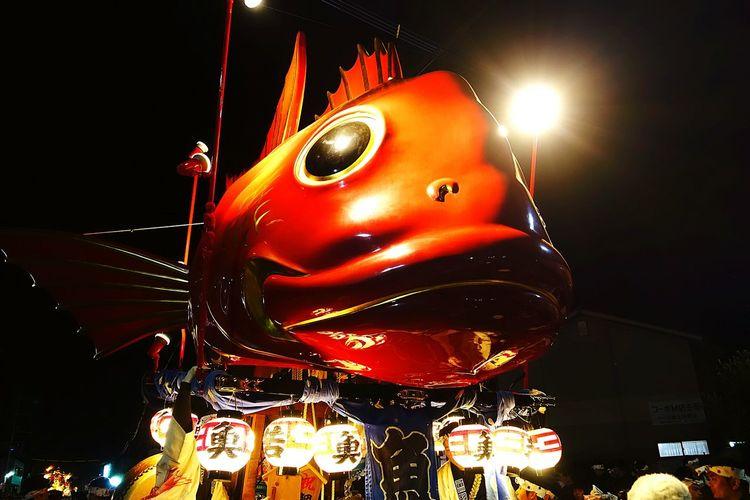 一番好きな鯛山です。どや顔です。 Karatsukunchi Hello World Saga,Japan Japanese Culture Japanese Festival Fish Japan Red Enjoying Life