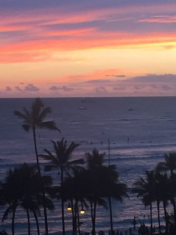 Pacific Ocean Sky Pacific Sky Pacific Sunset Sunset Beach Palm Tree Island Of Oahu, Hawaii Silhouette Dusk Sky Nature Tropical Tropical Paradise Tropical Island Oahu, Hawaii Hawaii Waikiki Beach Tropics Outdoors The Week On EyeEm Pacific Ocean View Paint The Town Yellow Been There. Lost In The Landscape Second Acts Oahu / Hawaii An Eye For Travel