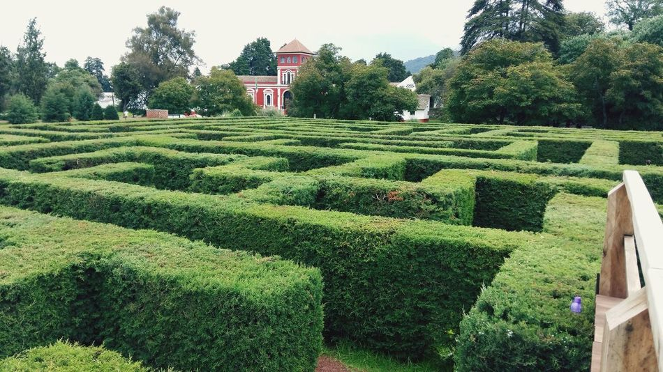 Laberinto Labyrinth Green Garden Photography Garden Outdoors Open Space Funny