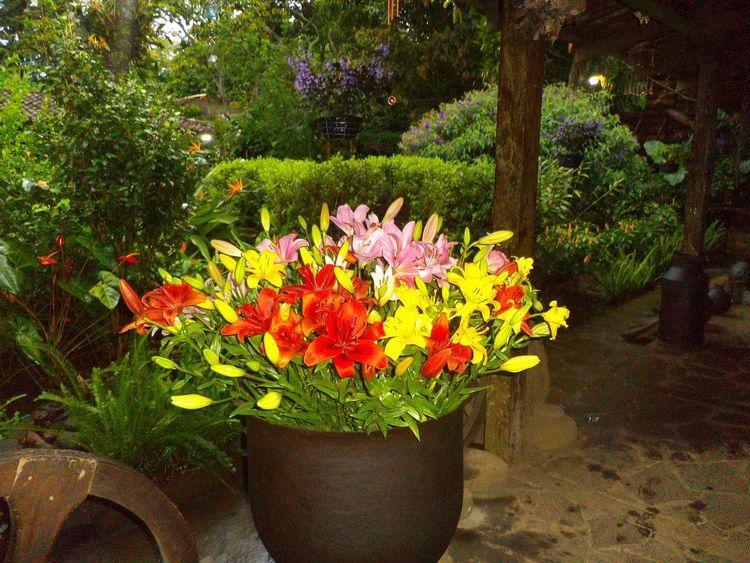 Flores De Eloisa Ahuachapan  Flowers Flower EyeEm Nature Lover