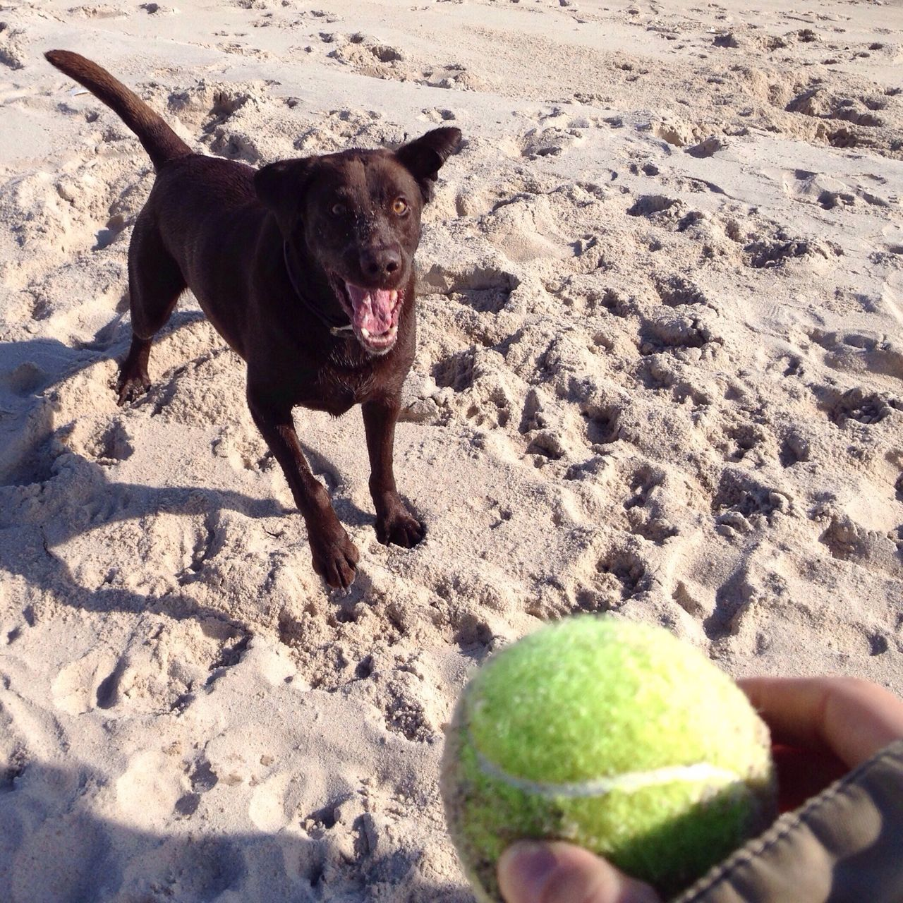 Beautiful stock photos of ball, Animal Themes, Ball, Beach, Day