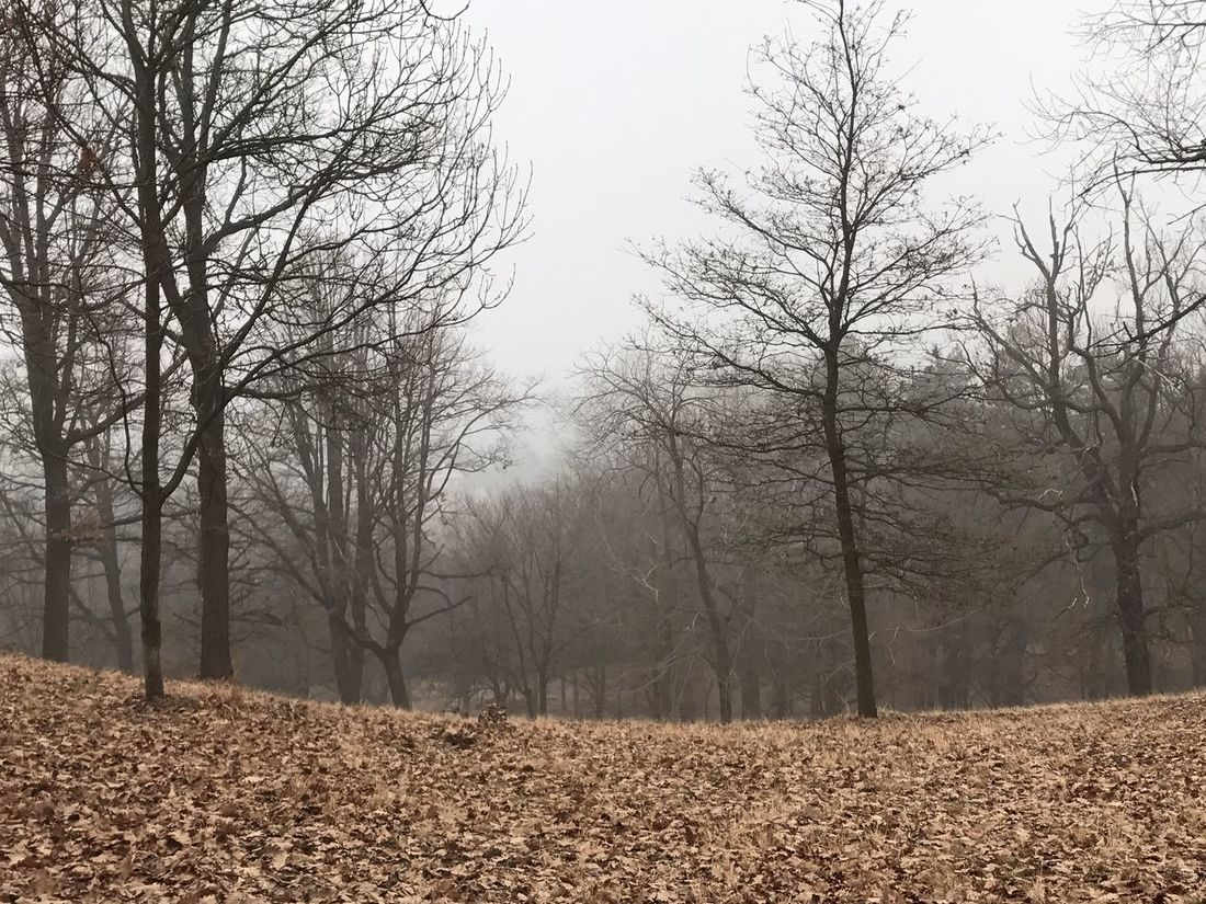 Nature Bare Tree Tranquil Scene Branch No People Tranquility Nature Photography Nature_collection Fog Nature Collection Naturelovers Tree And Sky Tree_collection  Wintertime Winter_collection Hazy Shade Of Winter Fog Foggy Weather Foggy Landscape Leaves_collection Leaves 🍁