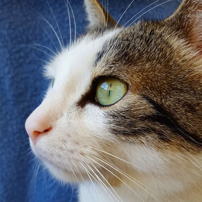 TicotheCat EyeEm Nature Lover EyeEm Best Shots Eye4photography  Cat
