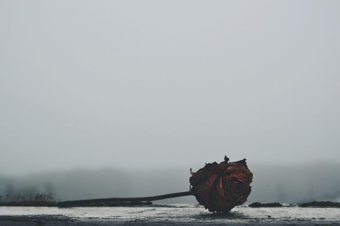 Nautical Vessel Outdoors No People Day Nature Sky Smog In The Sky Smoggy Sky Rose - Flower Rosé Dead Plant Town