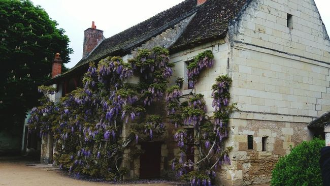 Farmhouse Glicine Flowers, Nature And Beauty Corpsdeferme Glicinegrimpante Glycine Farmhouses Exterior View Nature Photography