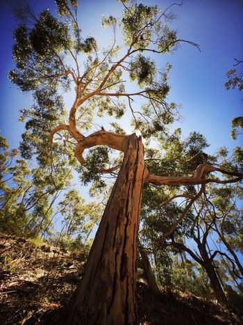 Tree Morialta Falls Hike Sunny Day IPhoneography Makemoments Moment Lens Adelaide, South Australia Landscape With Whitewall Landscapes With WhiteWall