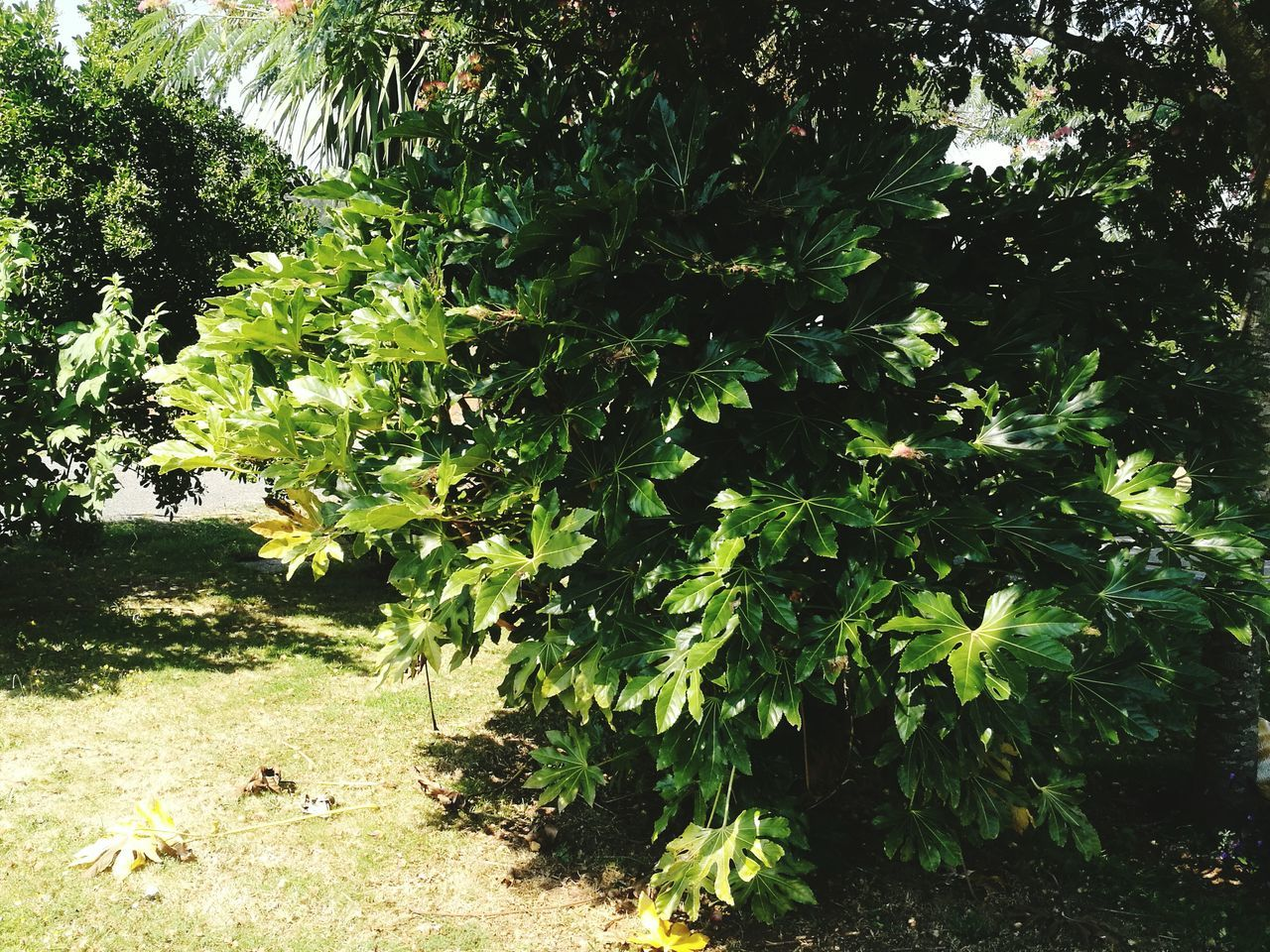 growth, green, nature, plant, vegetation, foliage, day, tree, outdoors, no people