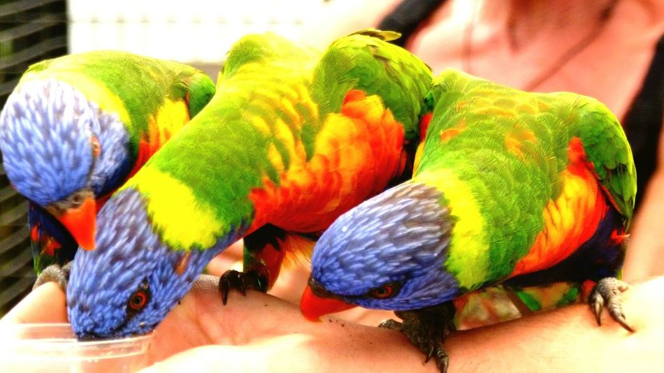 Animal Portrait Amazing_birds EyeEmAnimalLover Colorsplash Tropical Paradise EyeEm Animal Lover Beauty Sauvage Color Photography