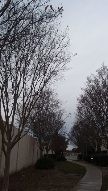 path Bare Tree Beauty In Nature Branch Day Nature No People Outdoors Sky Tree