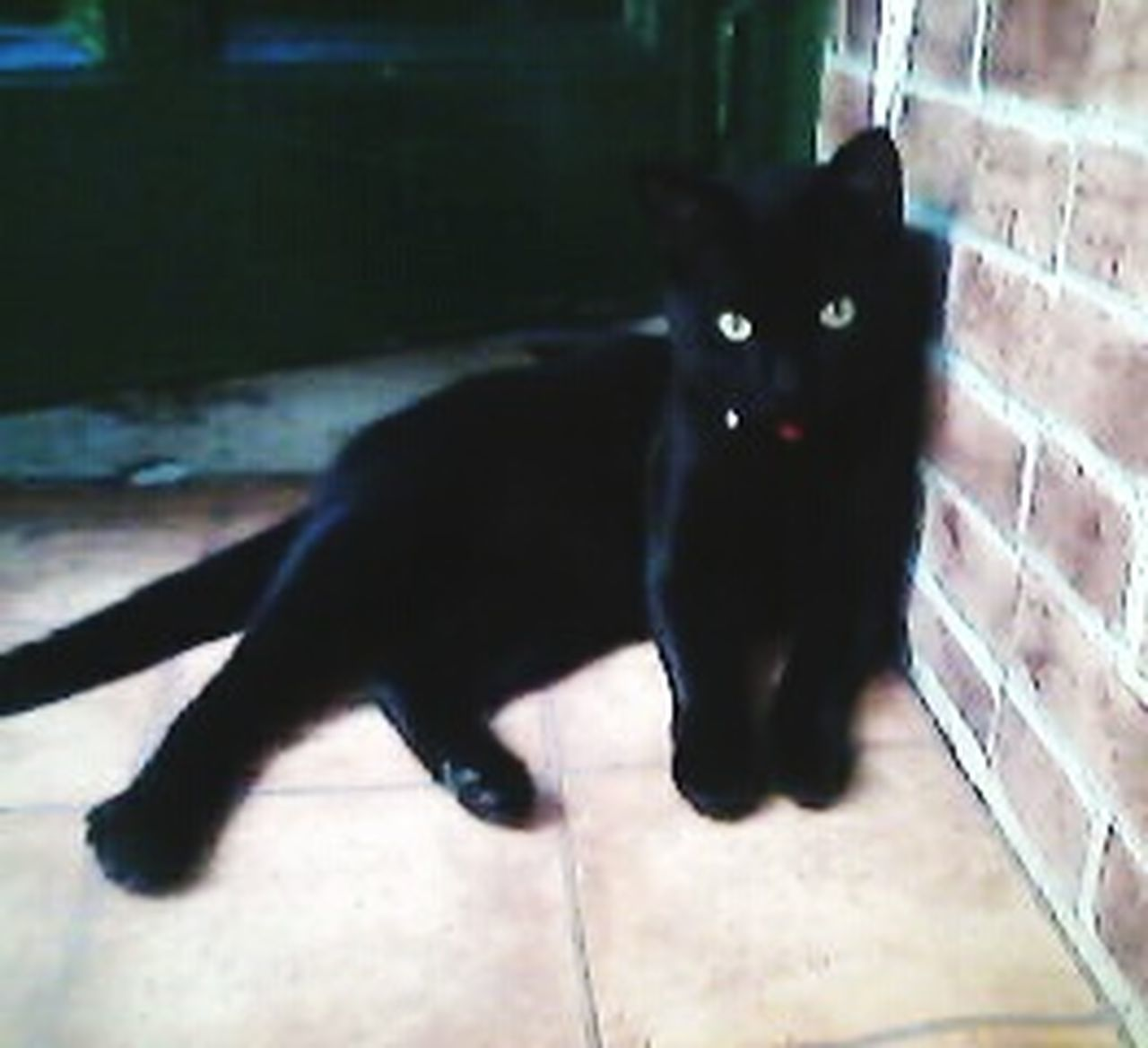 Pets Animal Themes Domestic Animals One Animal Domestic Cat Mammal Full Length Animal No People Animal Behavior Indoors  Day Beauty In Nature Cat♡ Cats 🐱 Black Cat Photography Black Cats Are Beautiful Black Cats Lovers Black Cats Black Cat <3 Cats Lovers  Gatos 😍