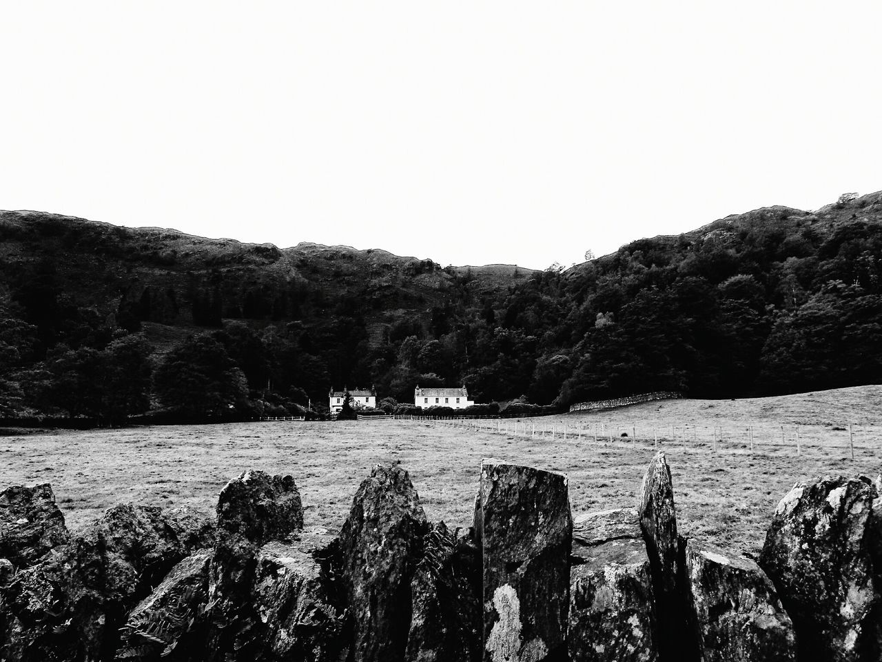 Grass Tree Landscape Nature Archival Growth Tranquility Rural Scene Outdoors Agriculture Beauty In Nature Lush - Description Day No People Sky Yorkshire Dales Nationalpark EyeEm Best Shots Nature Photography First Eyeem Photo Monochrome Naturelovers EyeEm Best Edits EyeEm Gallery Monochrome Photography