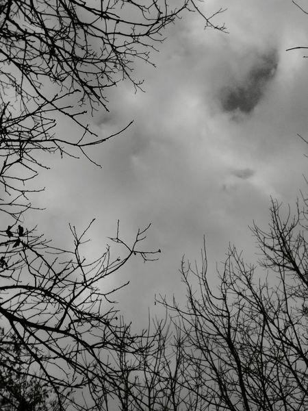 Cloud - Sky Winter Bare Tree Nature Tree Outdoors Sky
