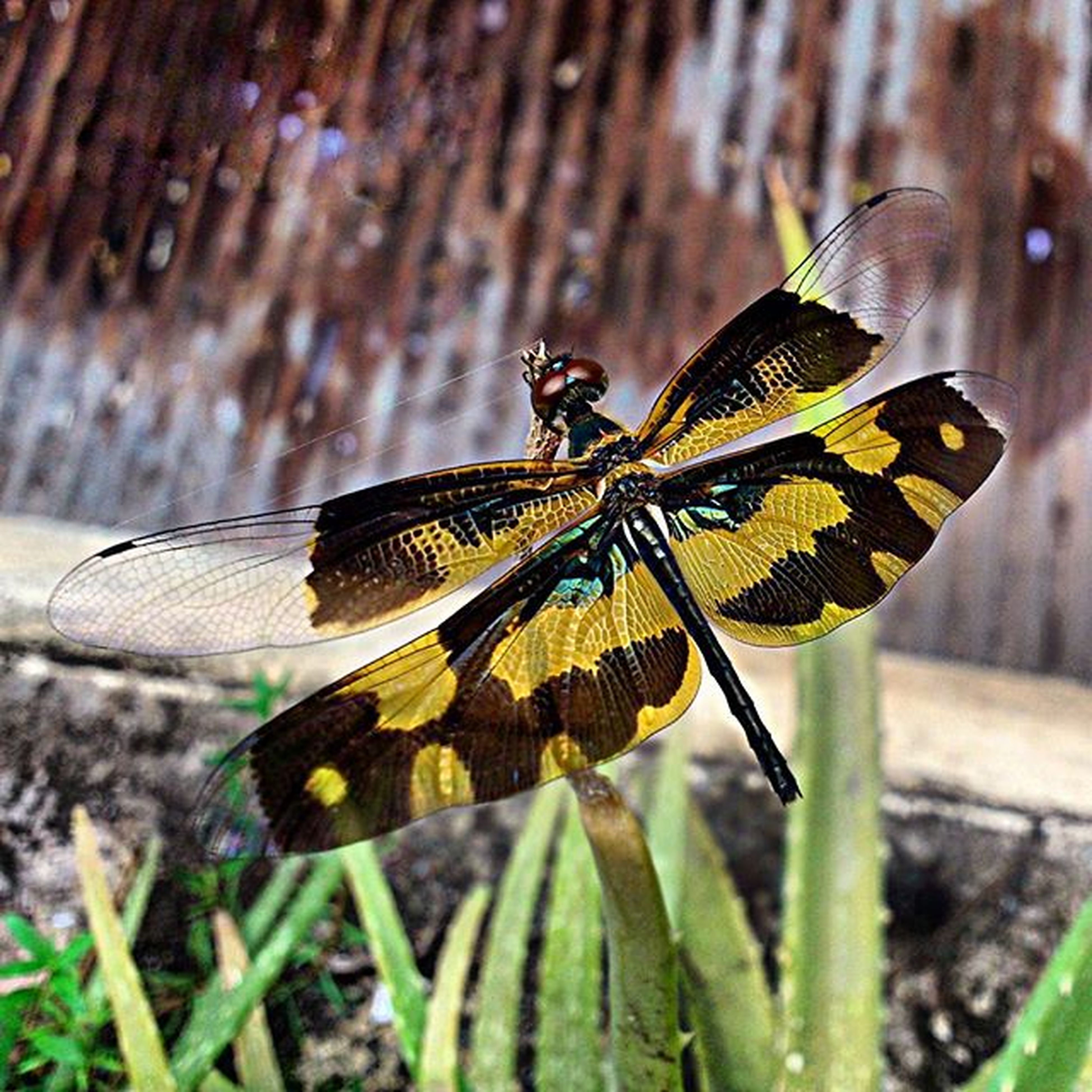 insect, animals in the wild, one animal, animal themes, wildlife, close-up, butterfly - insect, focus on foreground, butterfly, leaf, animal wing, natural pattern, animal markings, nature, day, animal antenna, fragility, outdoors, wood - material, plant