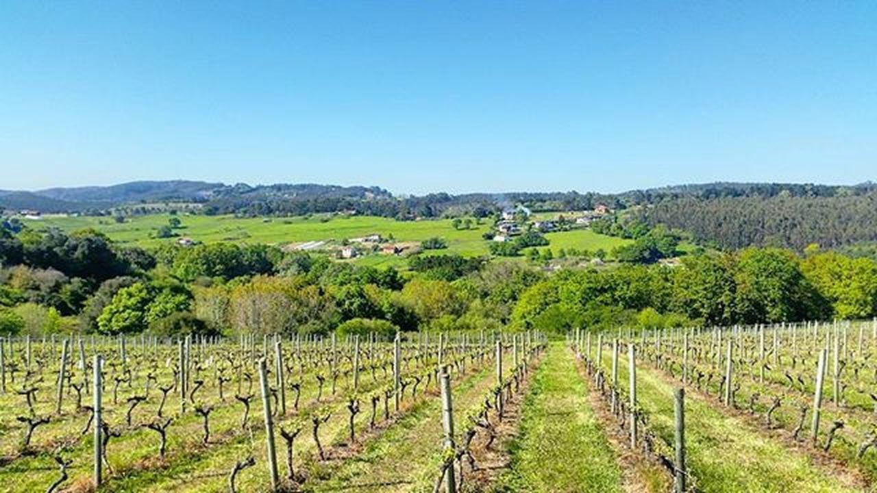 Viñedo. Erandio, Bizkaia. 📷 BasqueCountry Pais Vasco Vineyards  Winery
