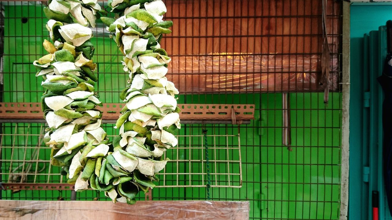 Green Color Cage No People Protection Animal Themes Bird Growth Nature Metal Birdcage Metal Grate Day Indoors  Fruit Dried Fruit Fruit Skin Mandarin Autumn Harvest Chinese Traditional Culture Hong Kong Fruit Market Wholesale Market