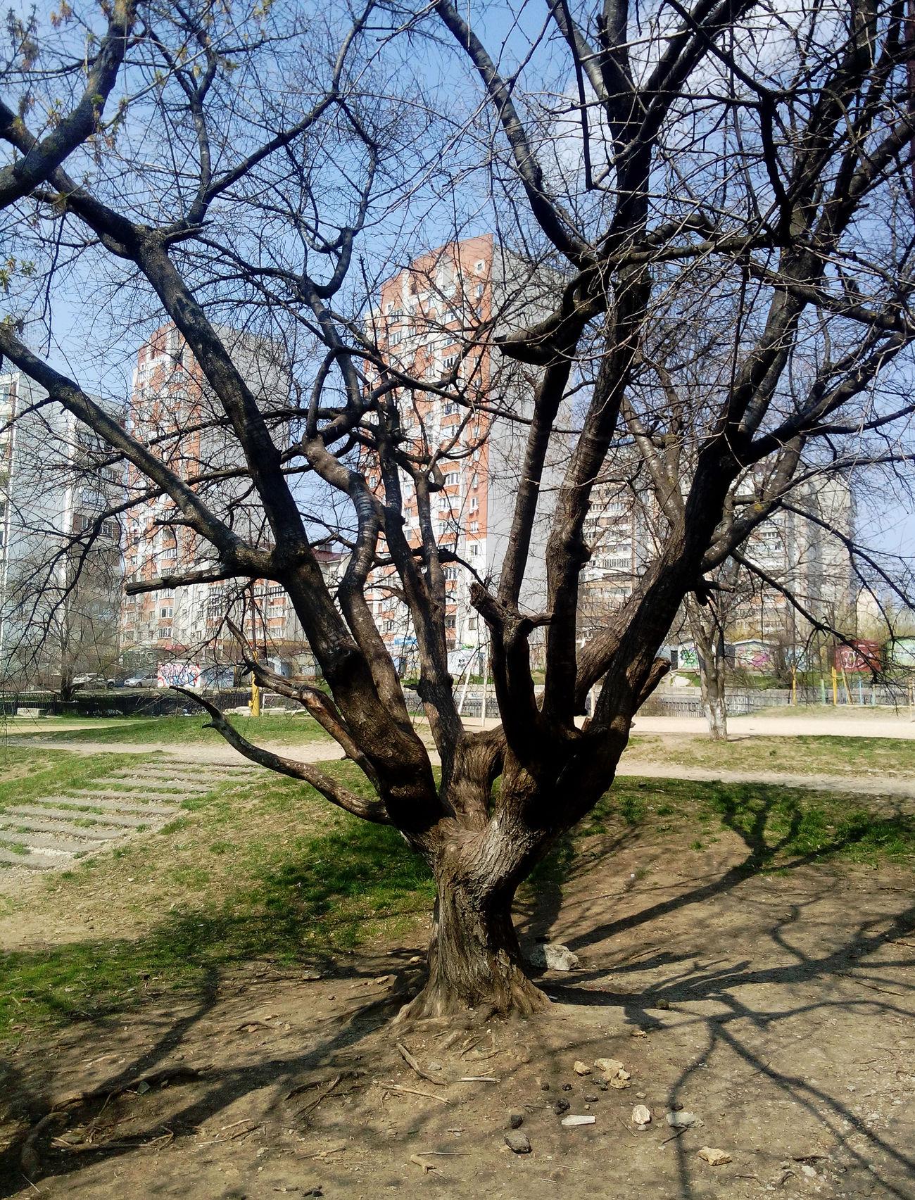 Beautiful Nature Beauty Cortex Curl зеленый Green Коричневый Grass Green Color Tree No People Outdoors Day Flora древесная кора дерево ствол растительность Природа Life Architecture Rostov-on-Don