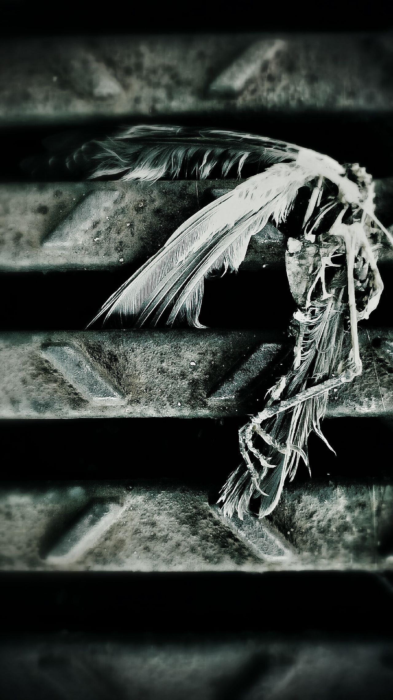 Angels Morte Anunciada Do Meio Ambiente Bird Bird Photography Birds Of EyeEm  Nature_collection Nature Indios Passarosferidos Poluição Ambient Asas Ossos Black White Blackandwhite Black And White Vscogood Vscogrid Vscodaily VSCO Photoart Vscogram Cam Photobirds