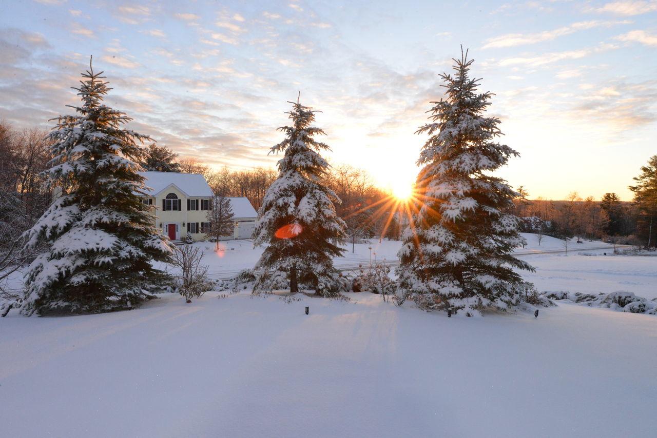 Birch Tree Bluesprucetree Cold Weather Freshsnow Sunrise Suttonma Winter Wonderland Winterscene