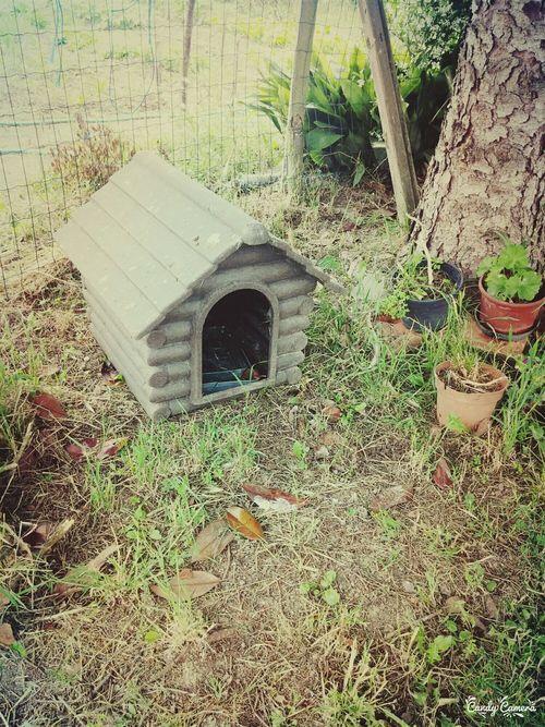Dog Giardino Cuccia Cane