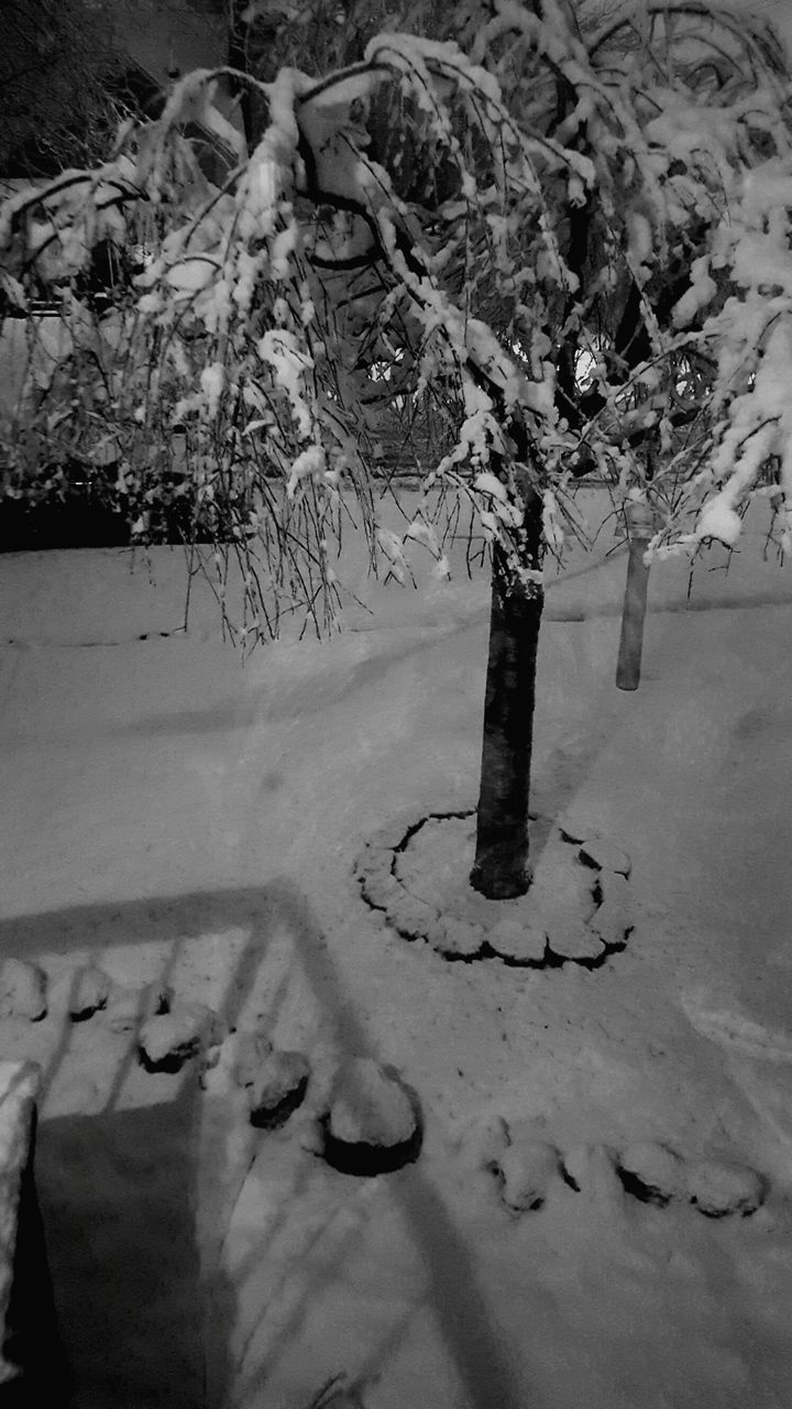 no people, winter, outdoors, snow, tree, nature, day, close-up