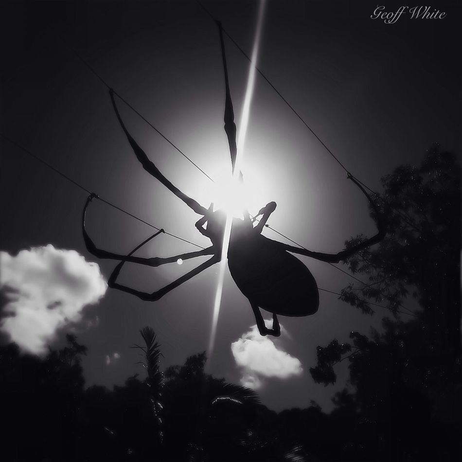 Black and White Spider taken today at Currumbin Sanctuary