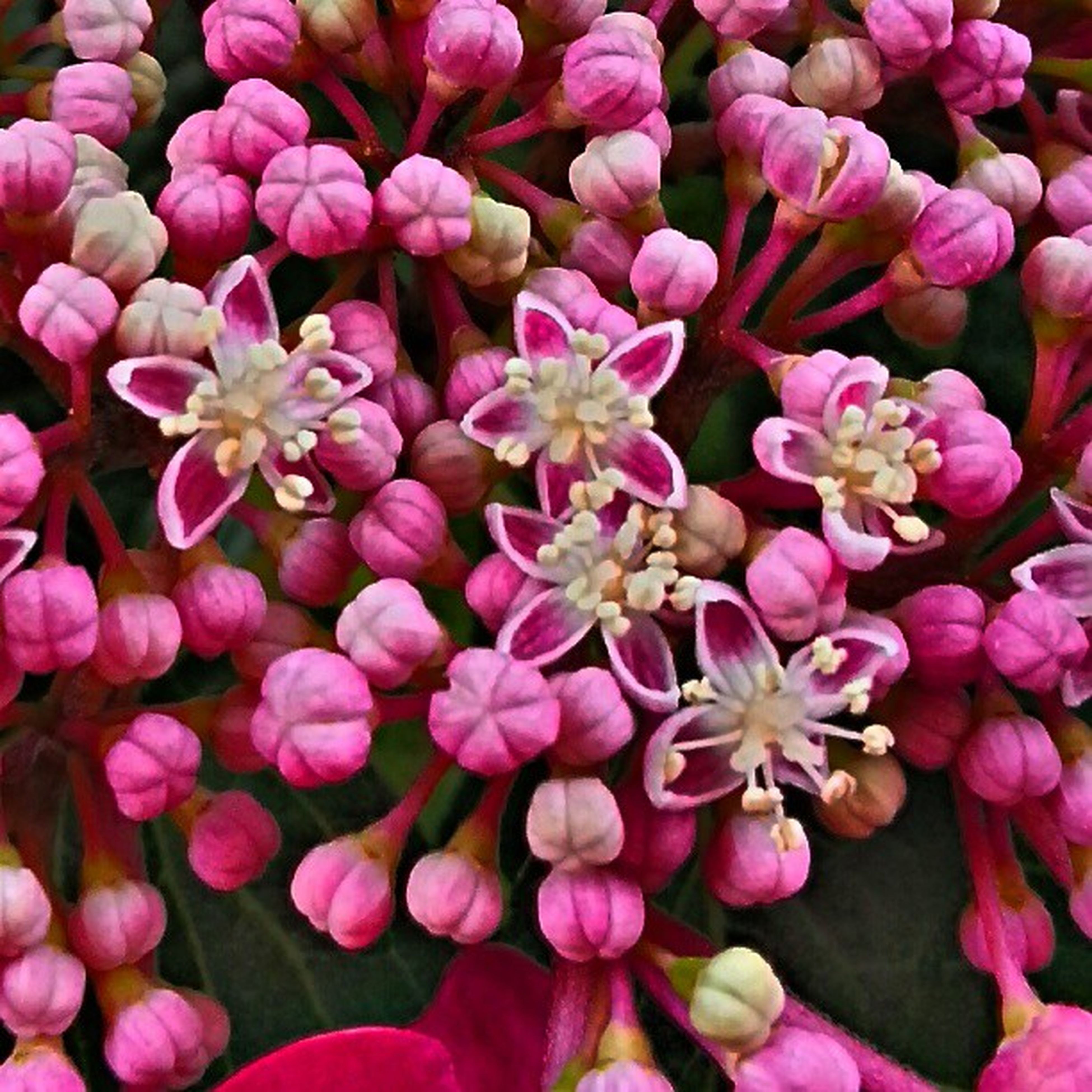 full frame, backgrounds, flower, freshness, abundance, petal, pink color, fragility, flower head, beauty in nature, close-up, large group of objects, growth, nature, pink, high angle view, multi colored, variation, no people, detail