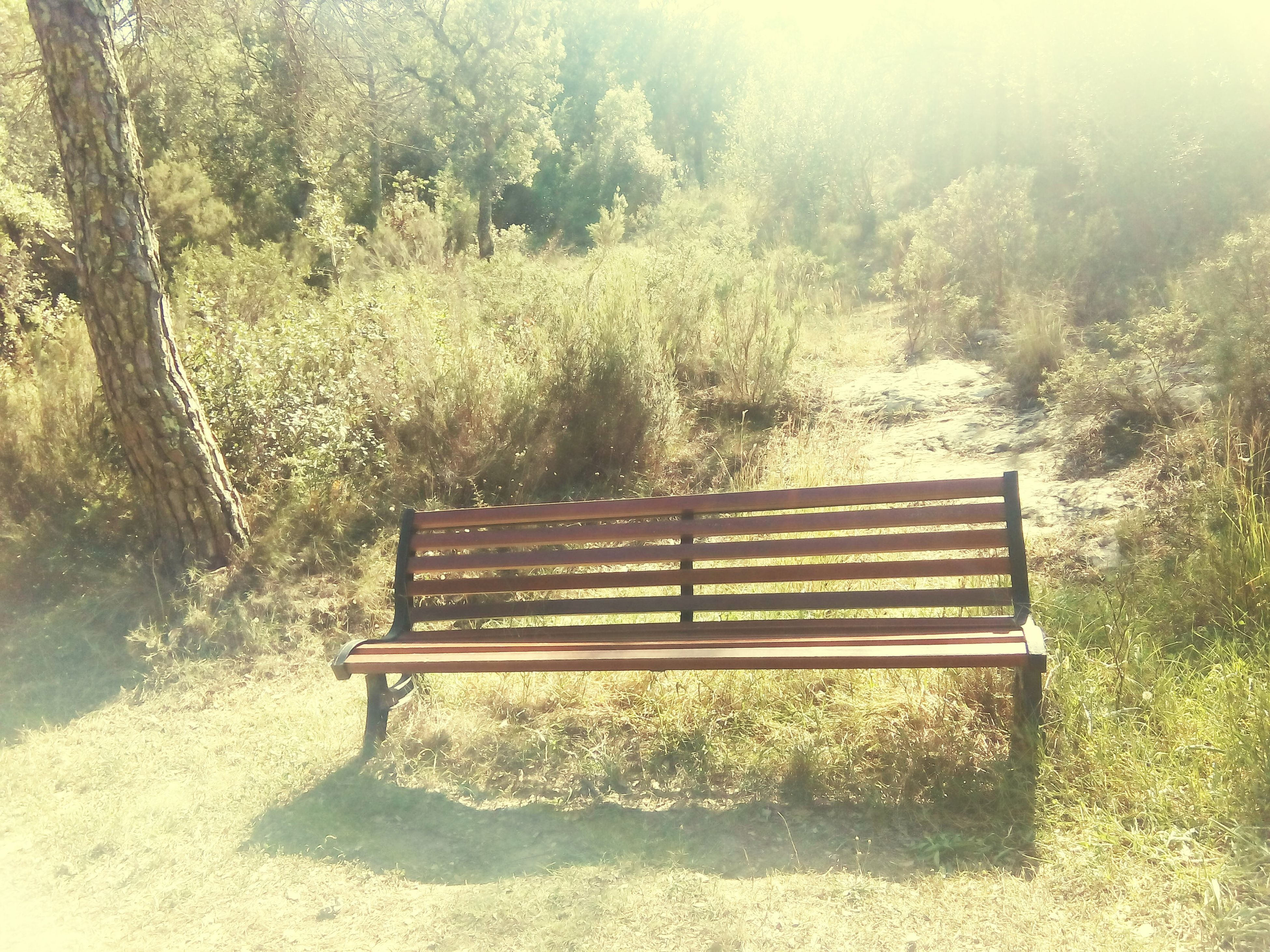 tree, tranquility, bench, growth, nature, tranquil scene, sunlight, plant, absence, beauty in nature, day, empty, scenics, park - man made space, wood - material, outdoors, no people, steps, field, grass