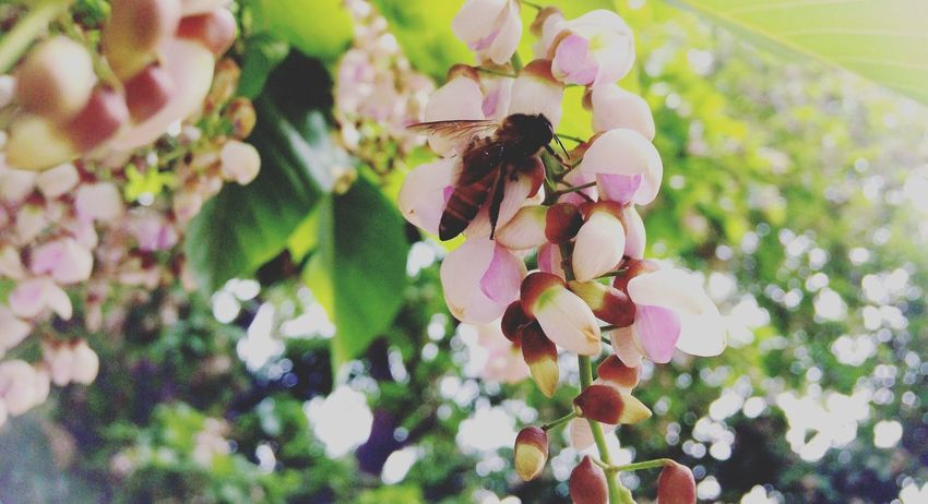 Leaf One Animal Nature Growth Flower Day Animal Wildlife Beauty In Nature Freshness Fragility Close-up Bee Animal Themes Animals In The Wild Outdoors Wildflower EyeEm