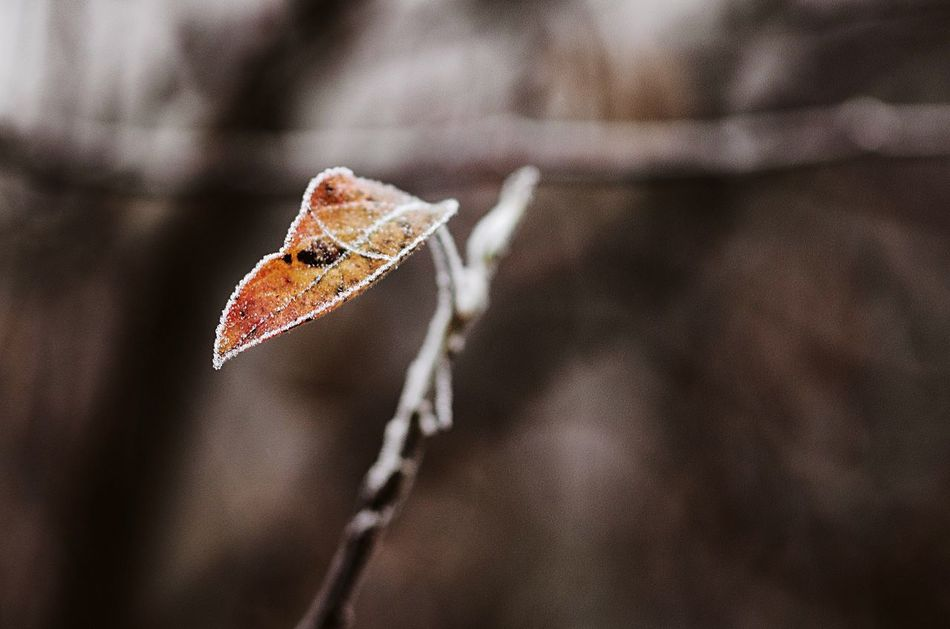 Never been so cold, so lonely Close-up Nature Day Outdoors Fragility Growth Beauty In Nature Ecosystem  Environment Flower Collection Wilted Plant Dried Plant Flower Plant Nature Tree Trees No People