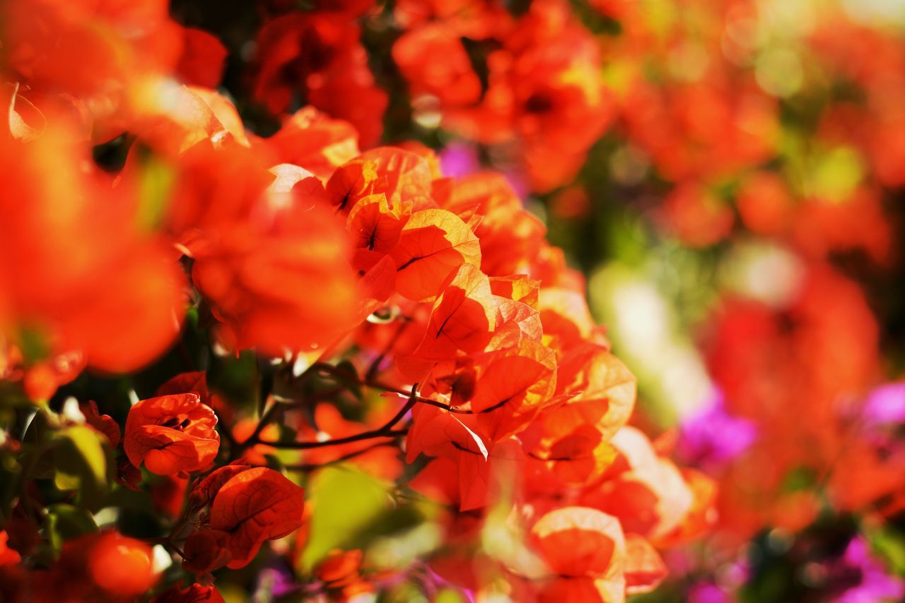 Orange Sunshine Beauty In Nature Blooming Close-up Day Flower Flower Head Fragility Freshness Growth Nature No People Orange Color Outdoors Petal