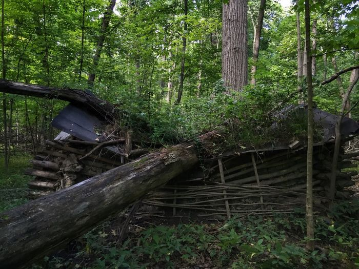 Tree fall on a rustic cabin Grosse Ile Manchester Woods Large Tree Trunk Fallen Tree Rustic Structure Ruins_photography Ruined Building Cabin In The Woods