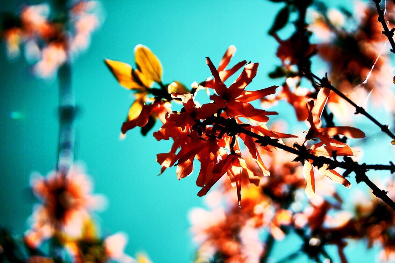 growth, nature, day, flower, beauty in nature, autumn, no people, leaf, outdoors, focus on foreground, tree, close-up, plant, fragility, sky, freshness, flower head
