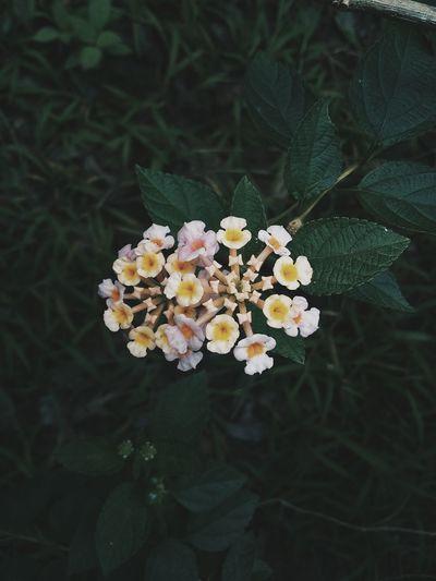 Green Flower Beauty In Nature EyeEmNewHere First Eyeem Photo