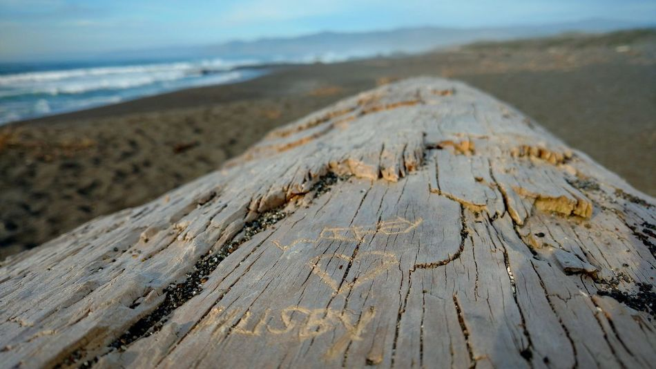 Beach Sand Nature Sea Focus On Foreground No People Tranquility Beauty In Nature Close-up Outdoors Eye4photography  Ocean❤ Beach Photography Fort Bragg, California EyeEm Nature Lover Drift Wood  Driftwood Art Beach Life Pacific Ocean Northern California Drift Wood On Beach Oceanlife West Coast Best Coast EyeEm West Coast Living TCPM