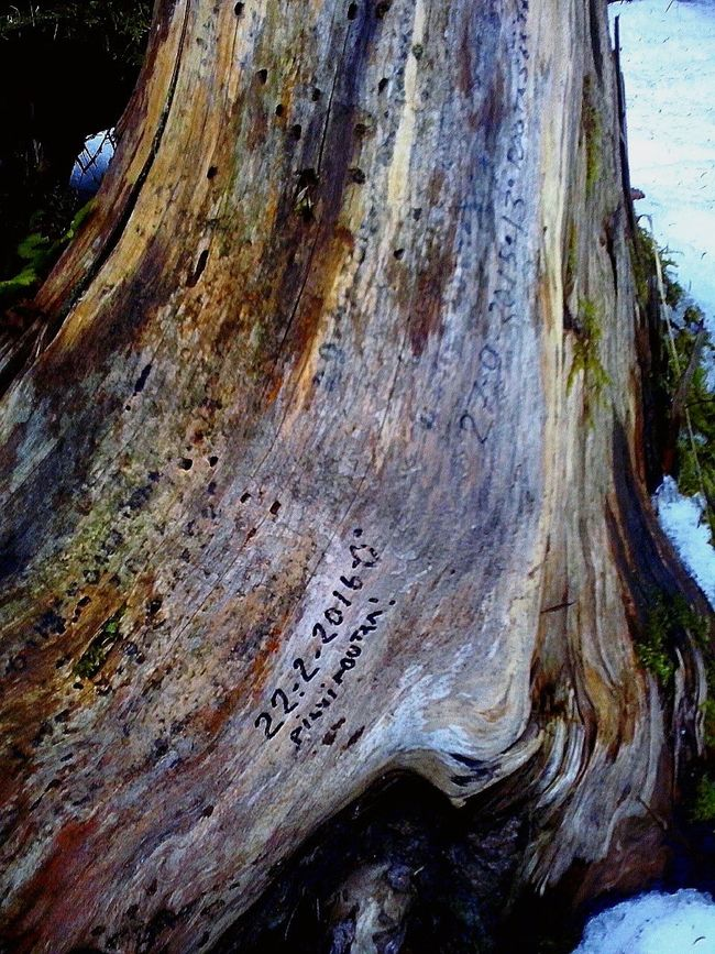 Forecast Notions Written on a Stump . In The Forest Wood Nature Photography Outdoor Photography Messages Notes Finnish