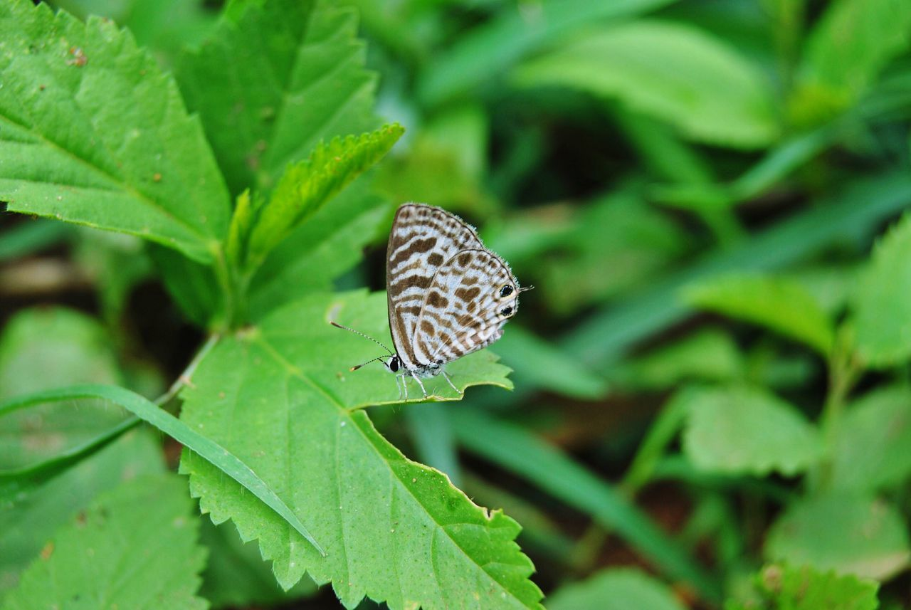 YPS Bengaluru Yps Bangalore Butterflies Butterfly Eyeembutterfly Macro Photography Lalbaghgarden
