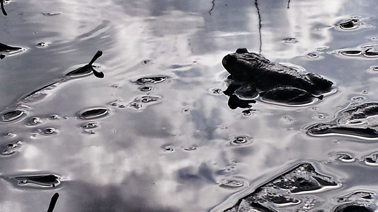 Hi! 🙋 For My Friends That Connect Mr. Frog 🐸 its been a while.. Toad Spring Has Arrived Ribbit Ribbitt EyeEm Nature Lover Spring Fever Almost Black&white